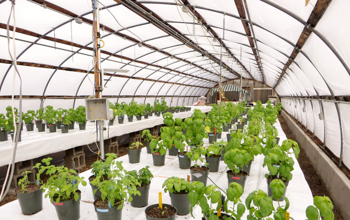 Controlled Environment Agriculture Department Of