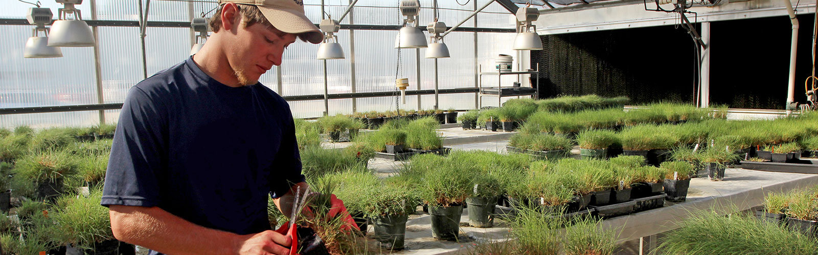 Turfgrass & Landscape Management | Department of Agronomy ...