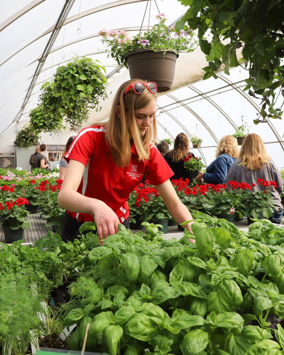 Horticulture Club member tends plants at their annual spring plant sale