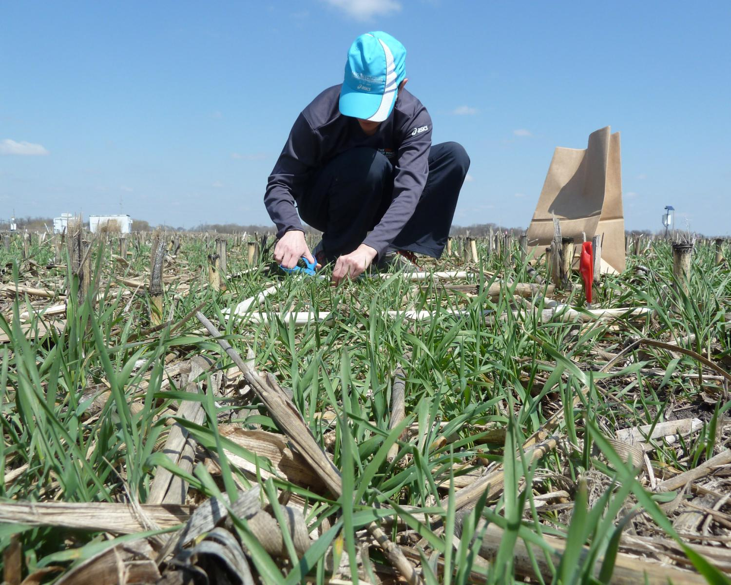 Cover Crops Research