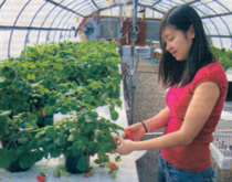 Han Do, UCARE Student in Agronomy & Horticulture