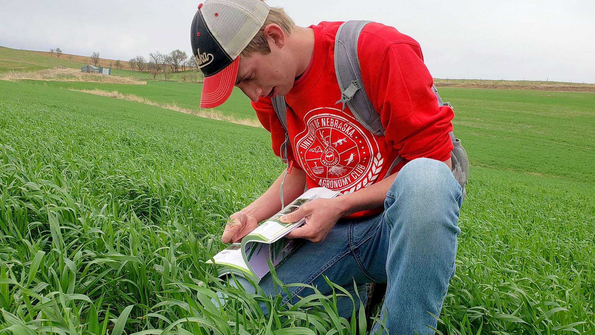 Chad Lammers, a senior plant biology major at Nebraska, scouts for weeds in a rye field on the family farm near Hartington, Nebraska. | Photo courtesy of Claire Schilmoeller