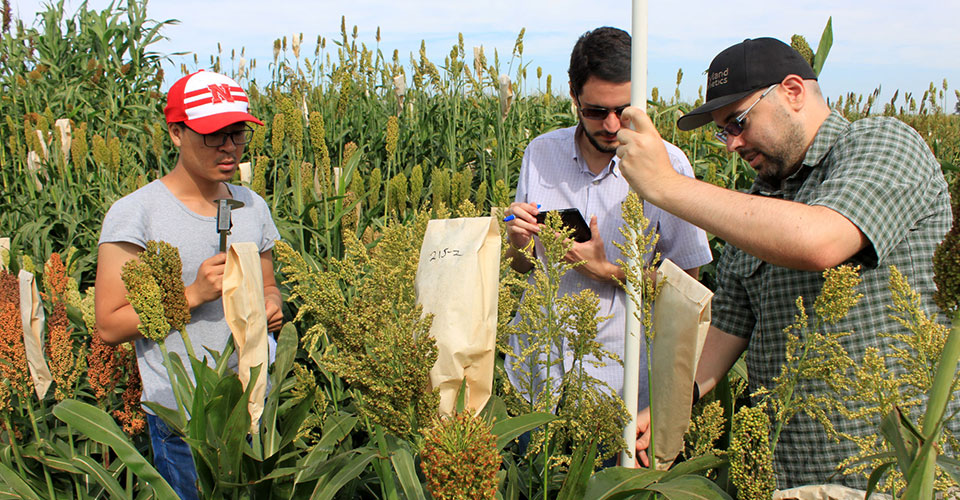 phenotyping sorghum James Schnable UNL