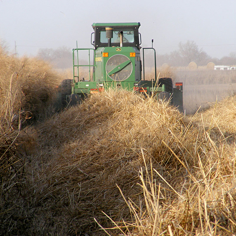 Bioenergy haying switchgrass
