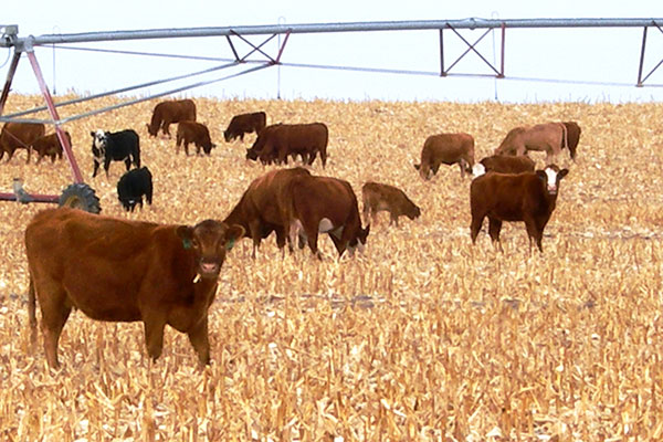 integrated crop-livestock systems