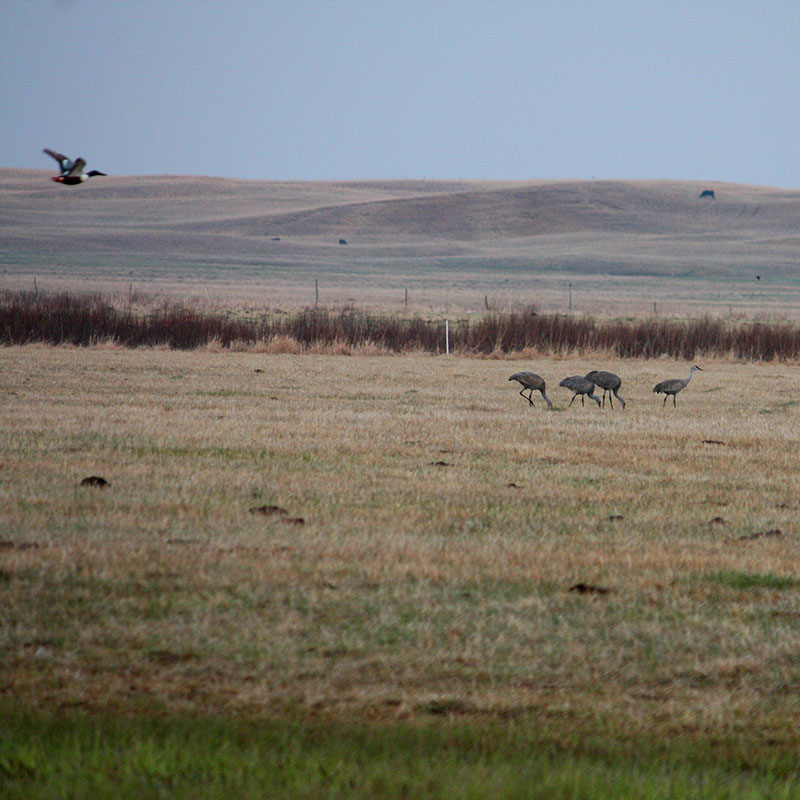 wildlife rangelands birds