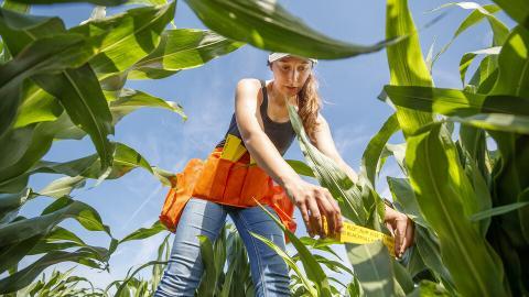 Mackenzie Zwiener, a graduate student in agronomy