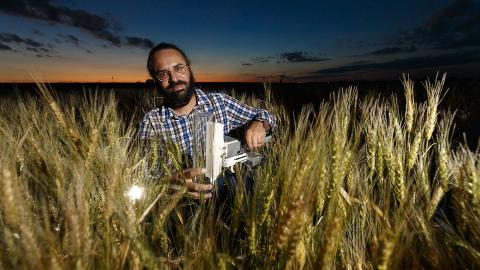 Nebraska's Harkamal Walia and colleagues have described a novel form of a gene obtained from wild wheat that has the potential to improve drought tolerance in cultivated wheat. Craig Chandler | University Communication