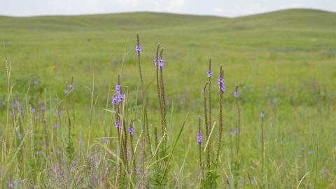 Natalie Jones | IANR Media The Nebraska Environmental Trust has awarded 23 grants totaling more than $2.1 million to University of Nebraska–Lincoln projects.
