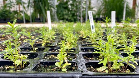 The Range Management Club will be giving away free native Nebraska plants in the Nebraska East Union on April 29.