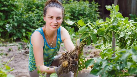 Nebraska Extension and the Department of Agronomy and Horticulture will again be offering a student gardening competition this summer. | Shutterstock