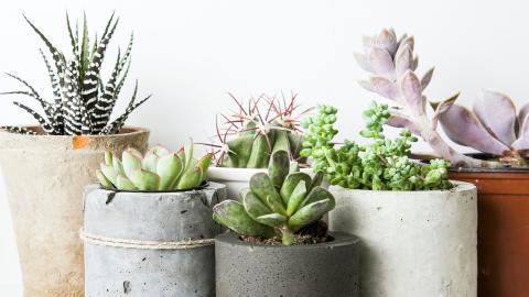 The Horticulture Club Succulent Sale is Feb. 12.   Shutterstock