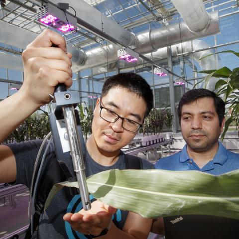Researchers and students of James Schnable, assistant professor of agronomy and horticulture
