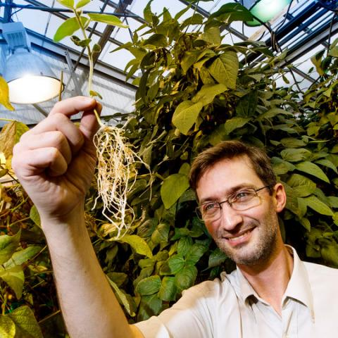 Nebraska plant scientist digs deeper into soybeans and soil bacteria