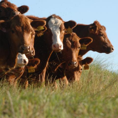 Grazing Conference