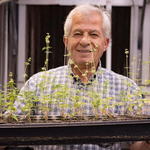 Professor Ismail Dweikat University of Nebraska