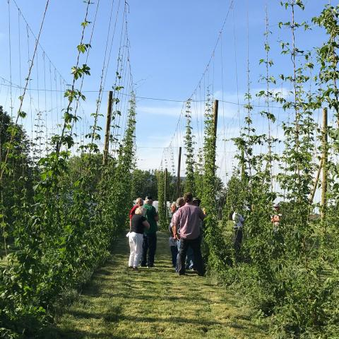 Nebraska Hops field day