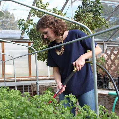 Horticulture Certificates
