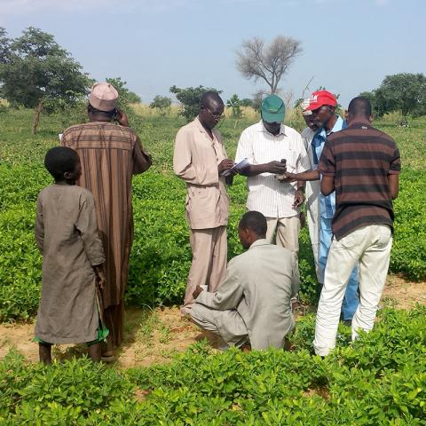 Researchers from Niger are doing an in-field assessment of the soil at one of their on-farm trial sites testing the sand content, soil pH, and electrical conductivity and depth. Farmers often have trees in their fields for soil conservation and cycling of nutrients. Photo credit Charles Wortmann.