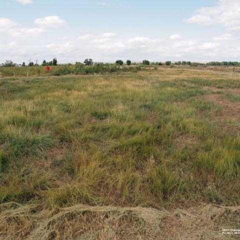 Cheatgrass challenge field