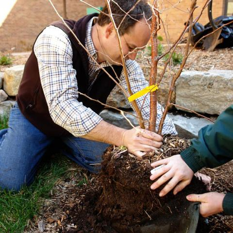 "Hands-on tree planting training will be offered as part of ""Re-Tree the Family Fun Zone"" Oct. 21 in Grand Island."