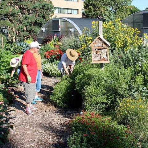 Master Gardener's working in Backyard Farming Garden