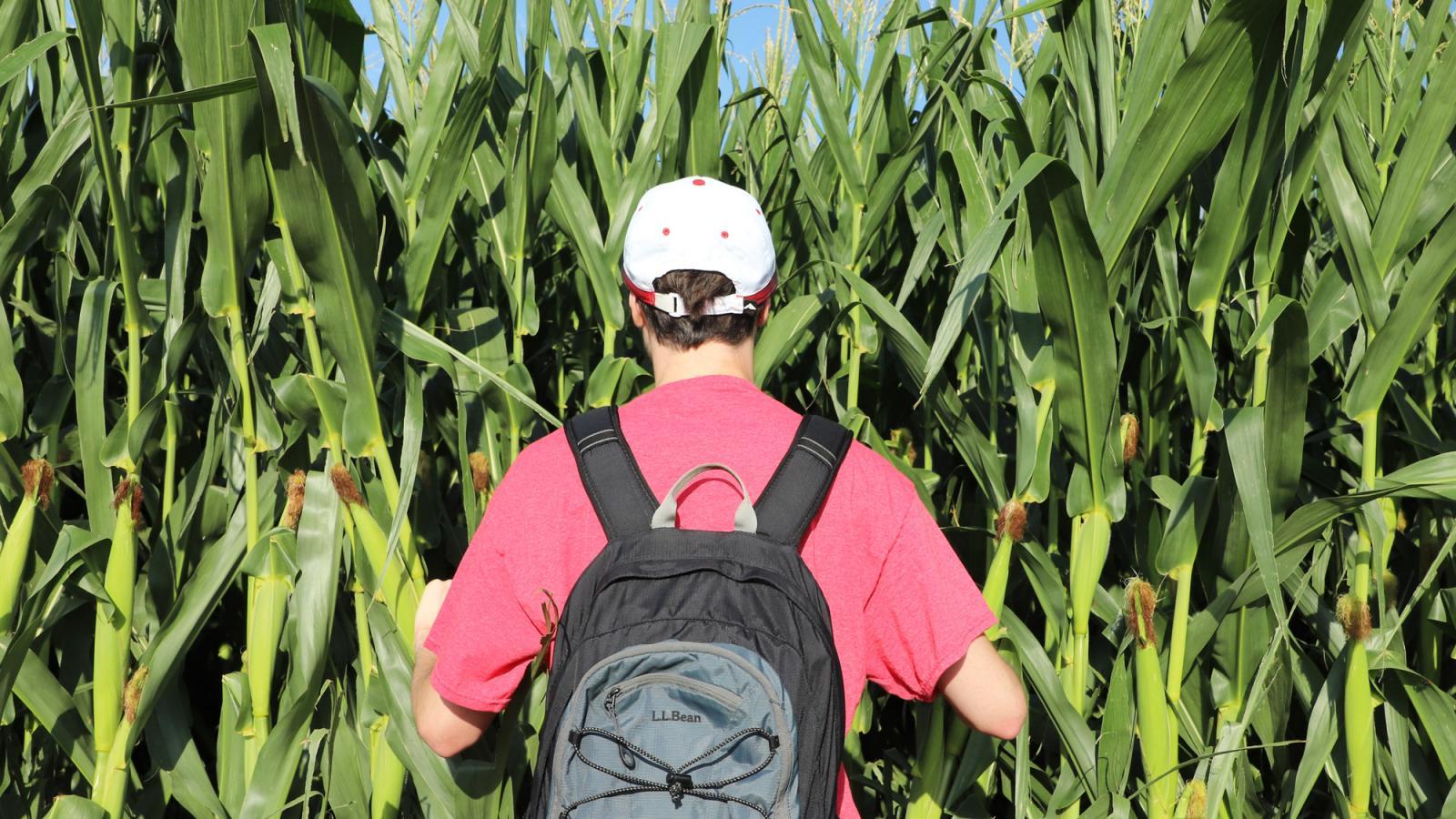 Student in corn field